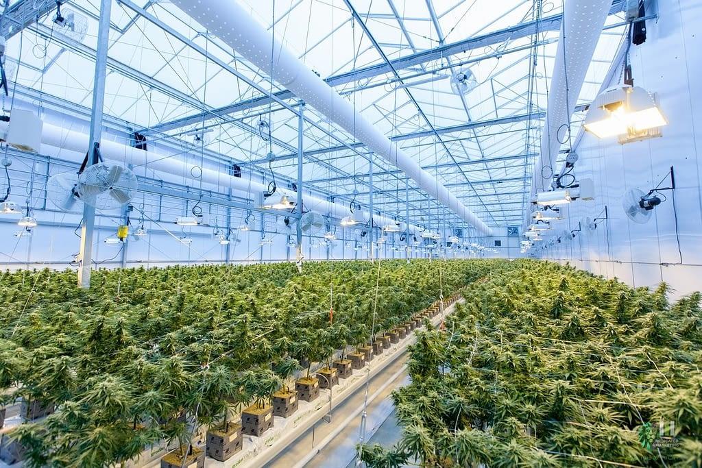 Navigating Cannabis Marketing