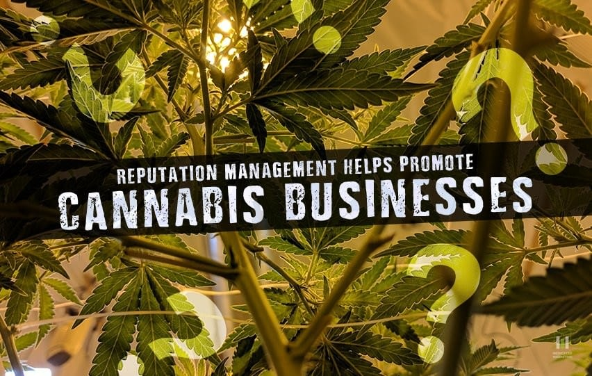 How Reputation Management Helps Promote Cannabis Businesses