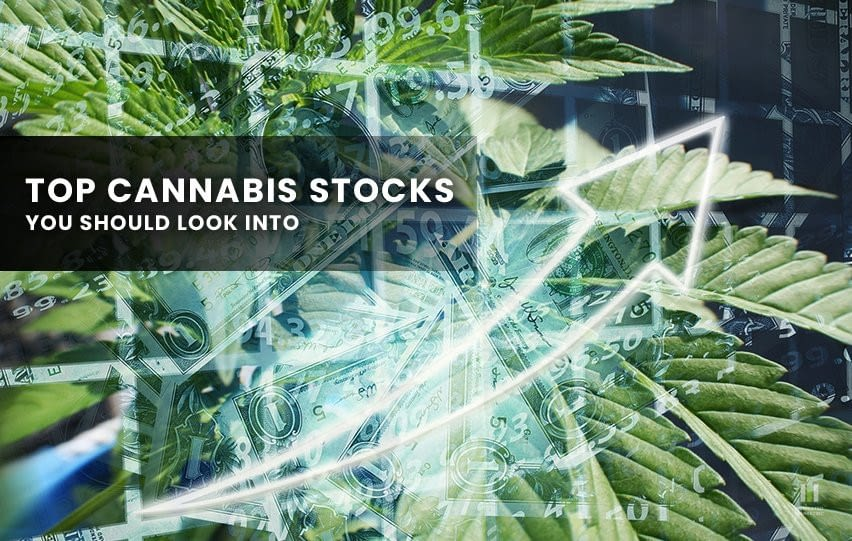 Cannabis Stocks You Should Look Into