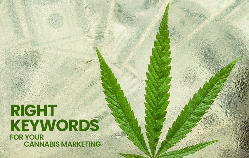 Right Keywords to Up Your Cannabis Marketing Game