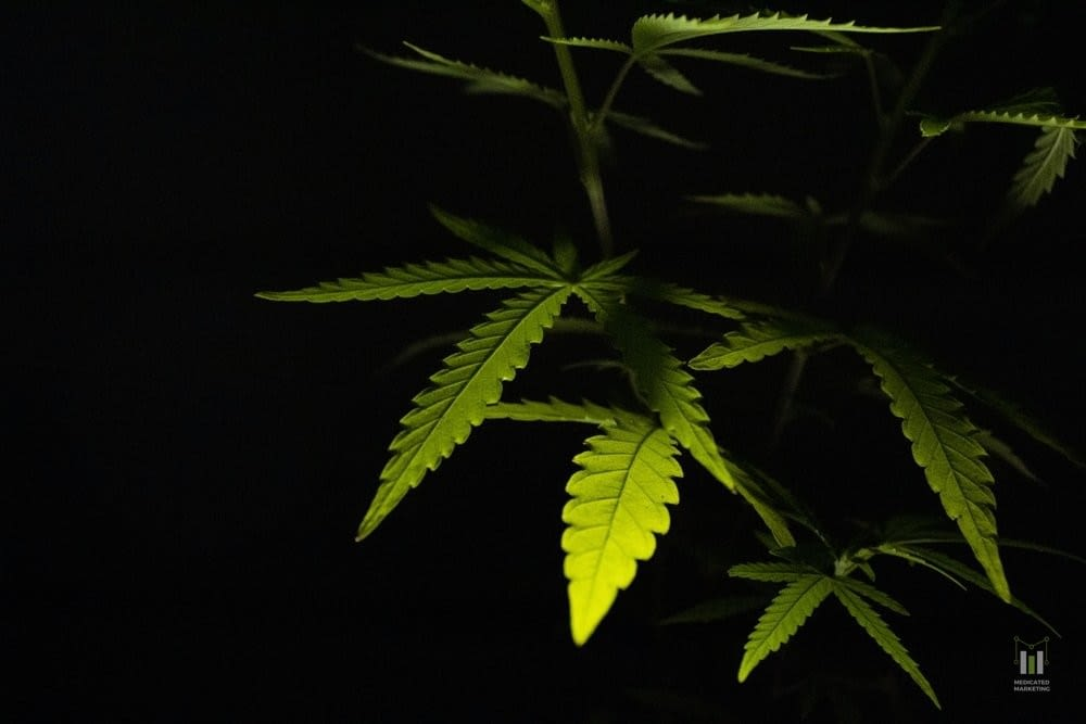 Marijuana Marketing Mistakes to Avoid.