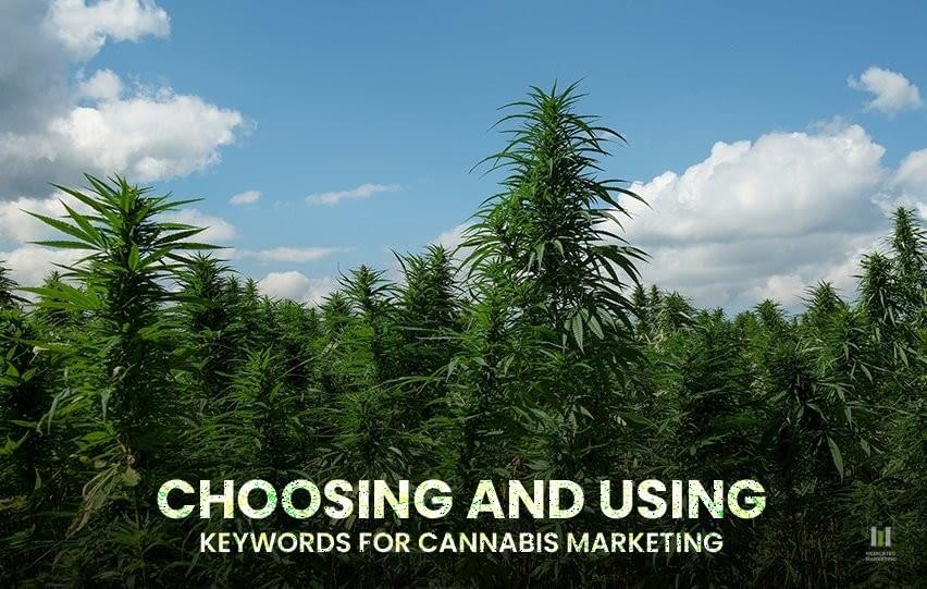 Using Keywords for Cannabis Marketing