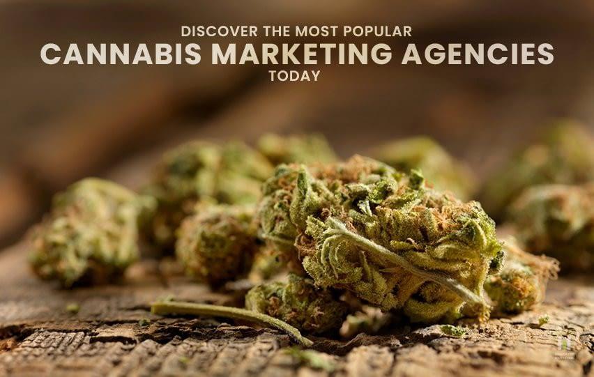 Most Popular Cannabis Marketing Agencies Today