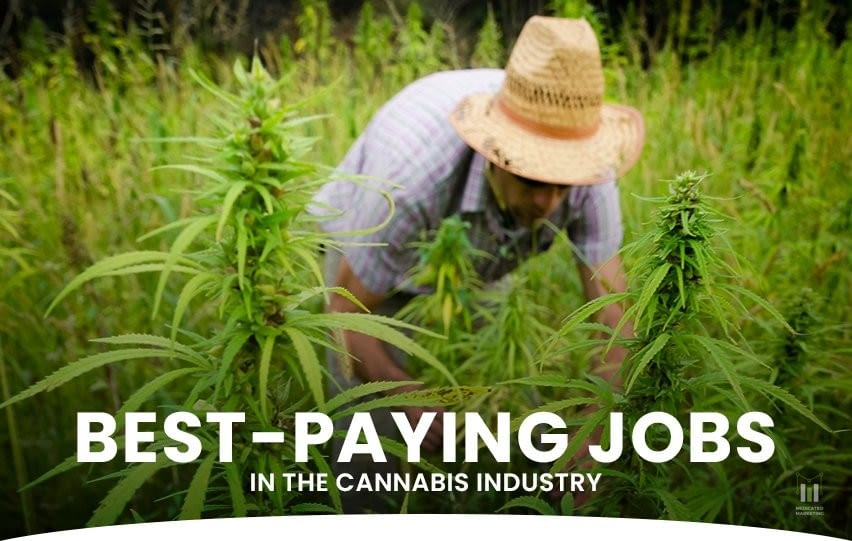Jobs in the Cannabis Industry